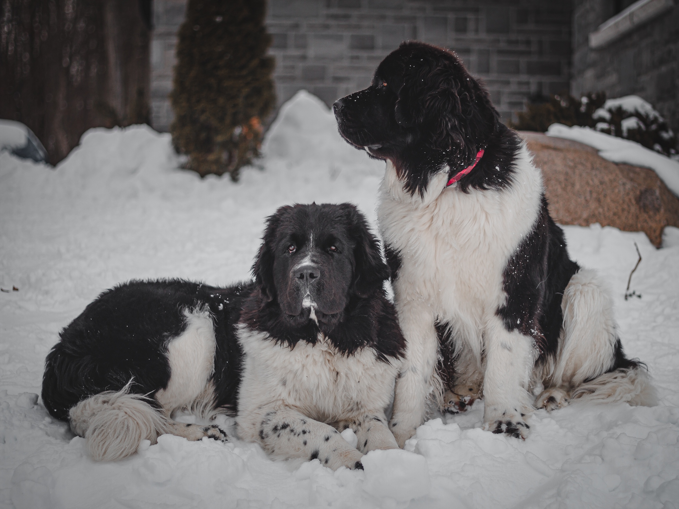 Indie and Murphy