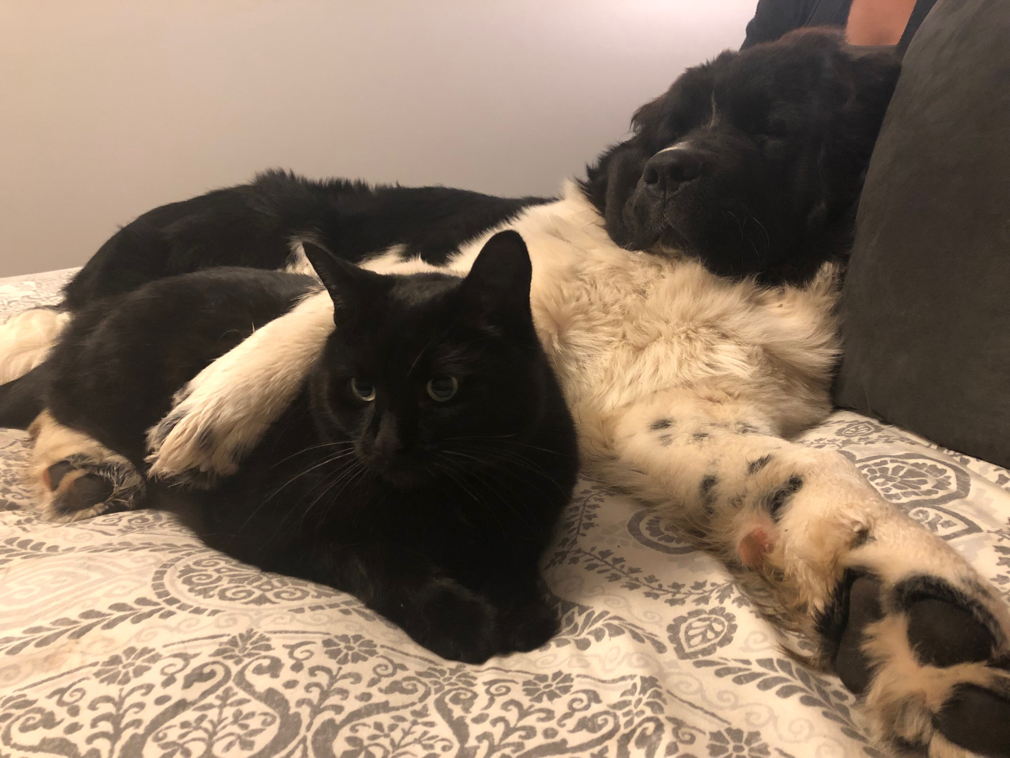 Murphy hanging out with his feline friend