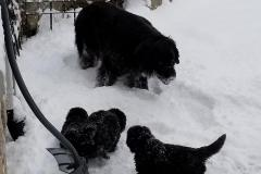 playing in the snow with Rudder