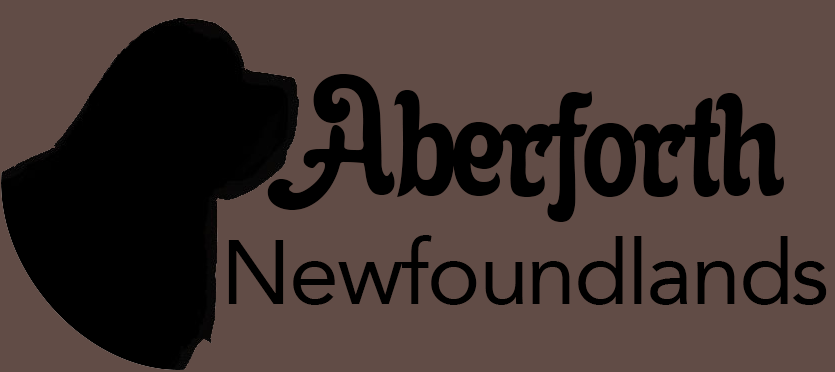 Aberforth Newfoundlands